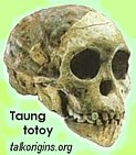 Taung Totoy